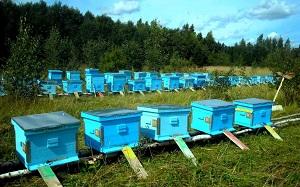 Разведение пчел на пасеке