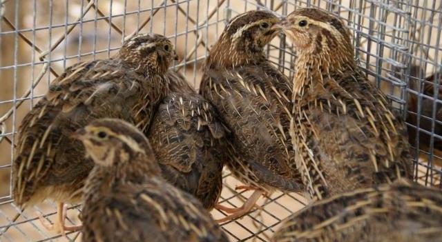 Птицы на ферме