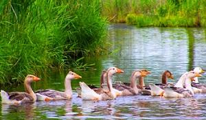 водоем для птицы