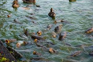 выращиваемая рыба