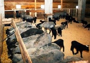 стойло для барашков