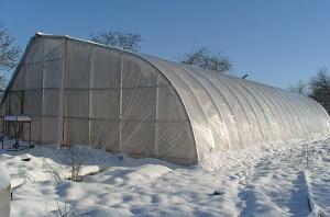 Как построить бизнес на зимней теплице: нюансы деятельности и написание бизнес-плана