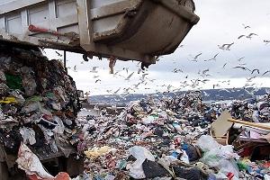 договор на вывоз отходов образец